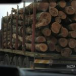 cash investigation razzia sur le bois ikea